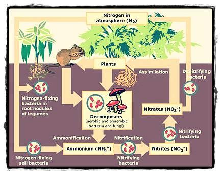Pengertian Ekosistem Indahnya Berbagi